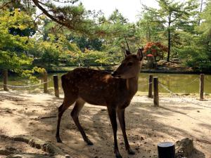 01 Nara