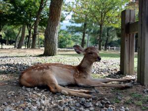 02 Nara