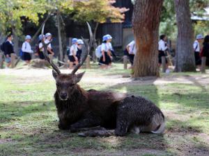 03 Nara