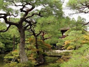 15 Kyoto